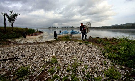 http://www.theguardian.com/world/2014/sep/01/mexico-baffled-death-fish-lake-cajititlan-pollution