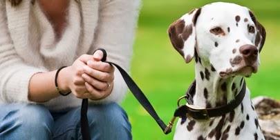 Conheça 6 raças de cachorros que possuem superpoderes