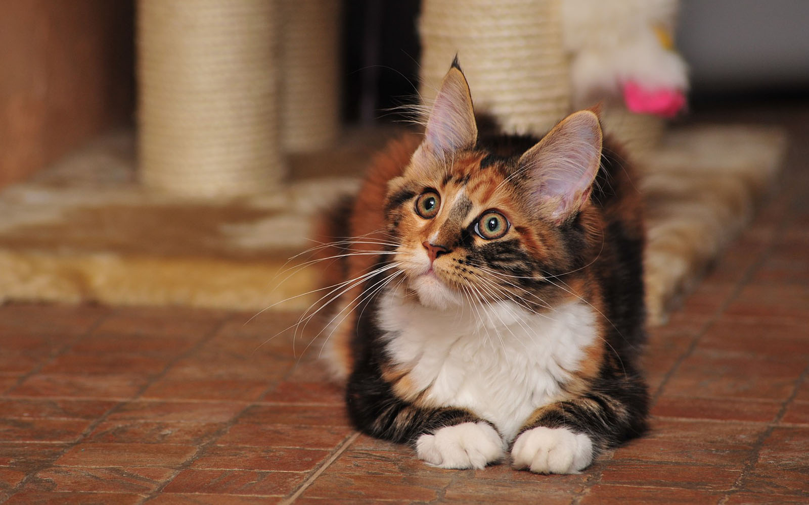 fostering kittens