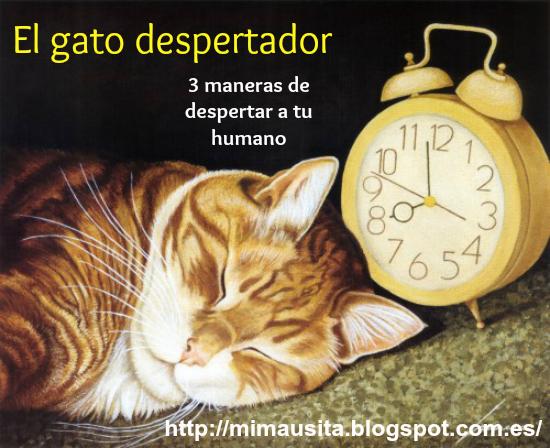 el-gato-despertador