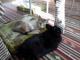 Tommie en Ginny