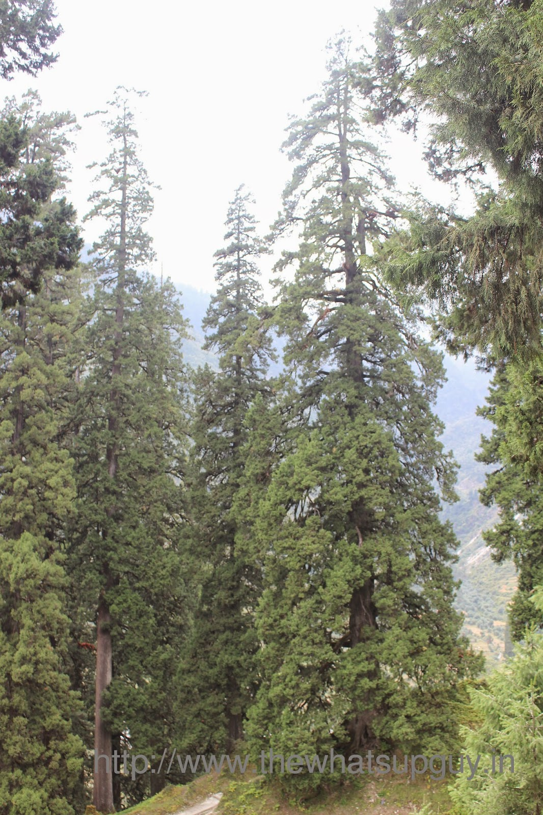 Tall Trees Roopkund Trek With India Hikes Day 6
