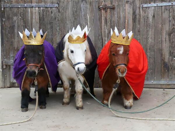 Funny animals of the week - 13 December 2013 (40 pics), three mini horse wear king costumes