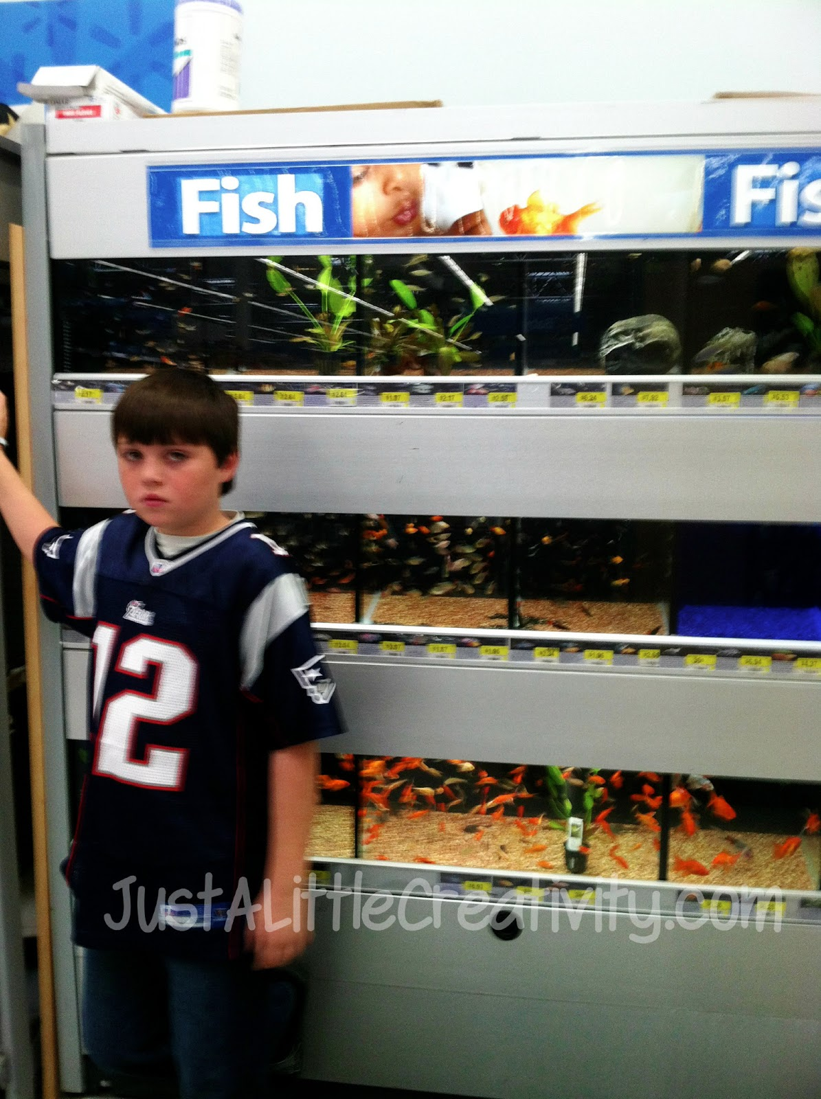 This has been january just a little creativity for Fish at walmart