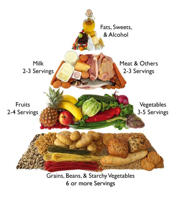 Rebarstone News Apa Saja Menu Makanan 4 Sehat 5 Sempurna Yang