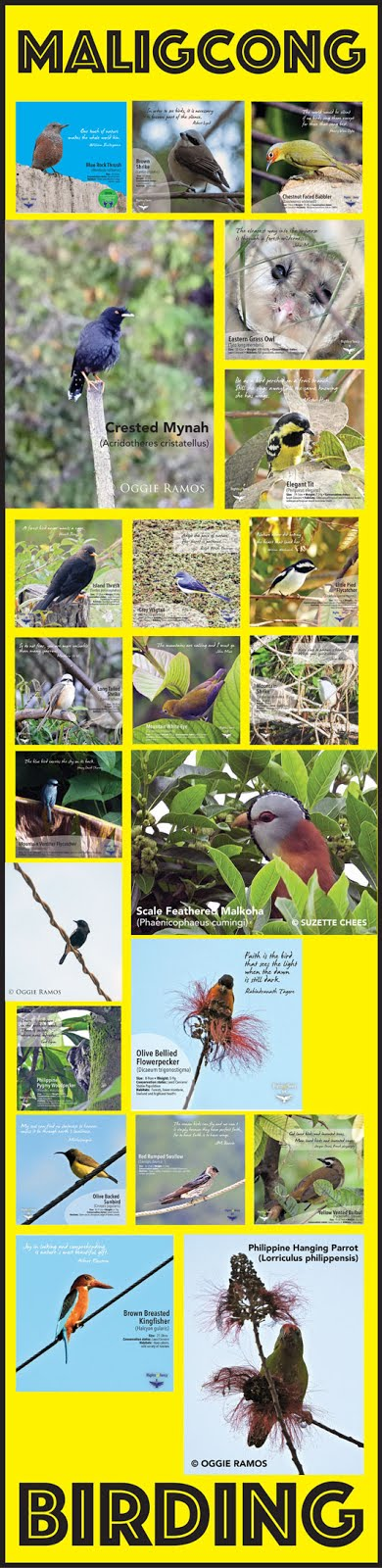 Maligcong Birding Gallery