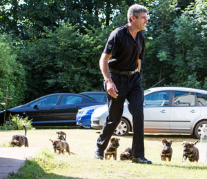 Seven puppies following PAul Glennon to meet the press and their new walkers