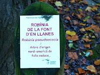 Placa identificativa de la robínia de la Font d'en Llanes