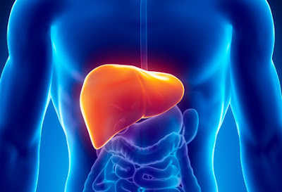 Symptoms of an infection in the liver