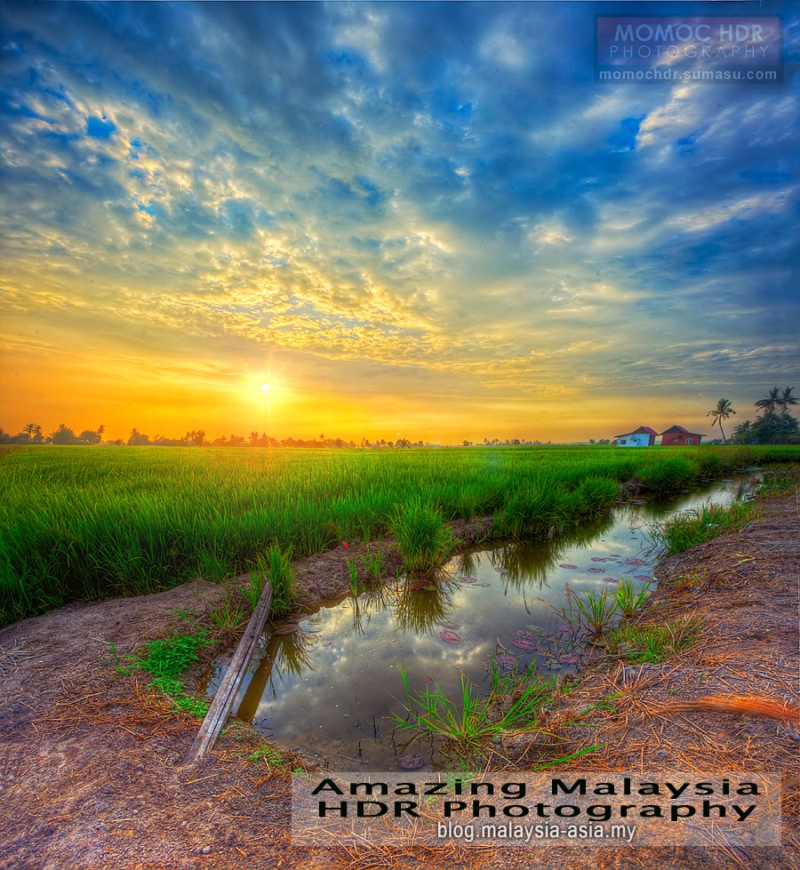 Paddy Field in Malaysia HDR Photography