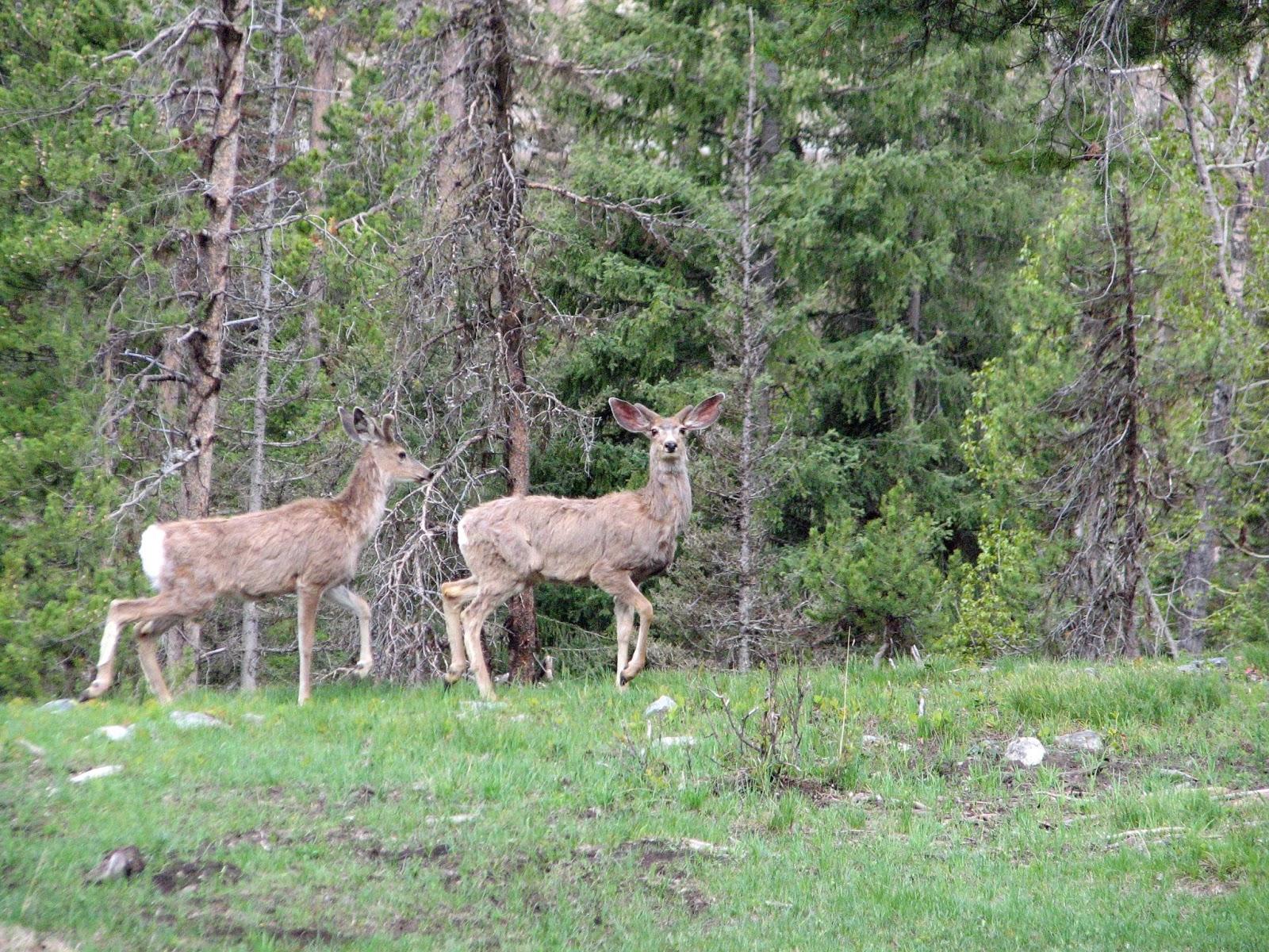 Deer elk scenery photos driving through moose creek for Deer scenery
