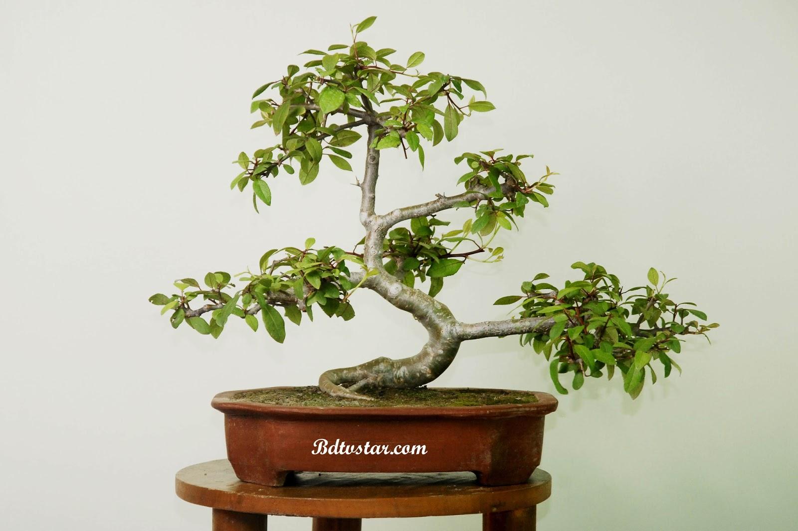 bonsai wallpaper 03 ndash - photo #30