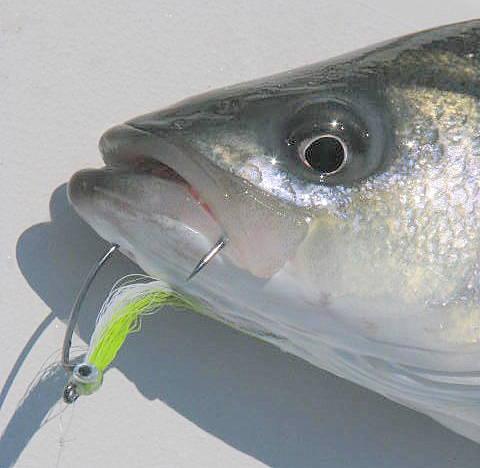 Housatonic river striper fishing report for Frances fleet fishing reports