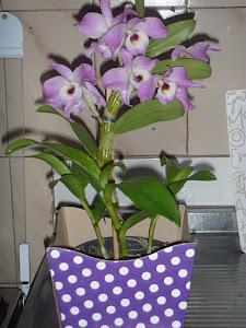 Minha Orquídea...