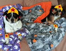 Wonder Pups