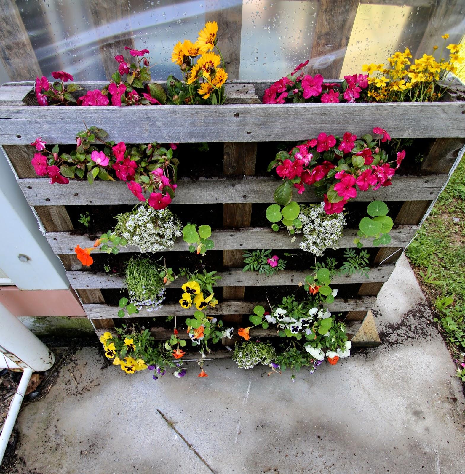 Mur vegetal en palette for Mur vegetal avec palette en bois