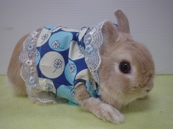 Animals wearing clothes - photo#8