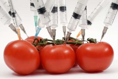 Genetically Modified Food Facts