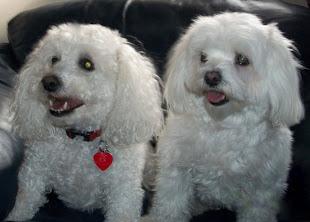Maxy   &   Tonka