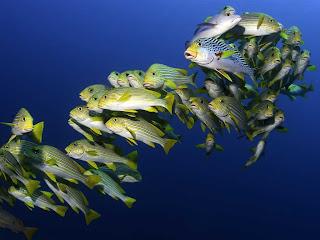 Under The Sea Wallpaper