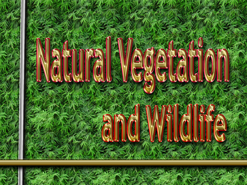 Natural Vegetation and Wildlife Wiki http://topperssocialscience.blogspot.com/2013/01/natural-vegetation-and-wildlife.html