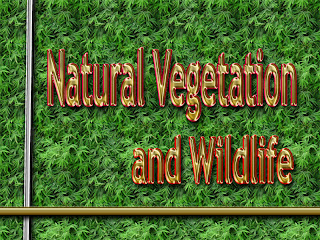 Natural Vegetation and Wildlife-Class 09