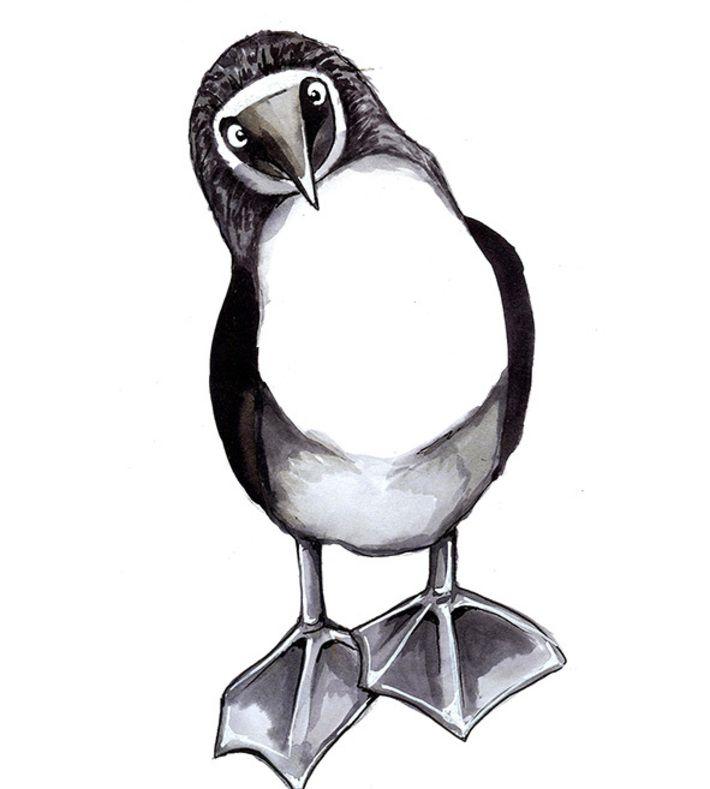 Stine Hvid, illustration i sort, hvid