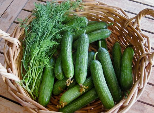 how to grow and harvest dill