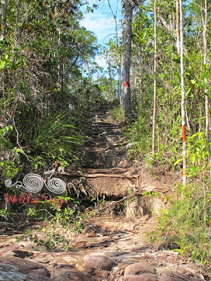 Lintang Trail Heath Forest @ Bako NP - WireBliss