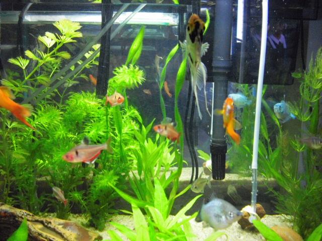 Aquários Plantados e Peixes de Água Doce