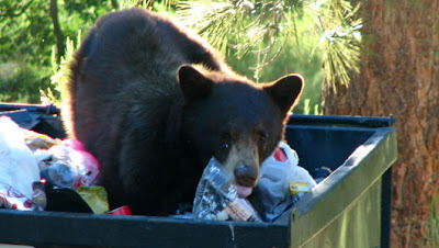 Grizzlies in Dumpsters in Orlando