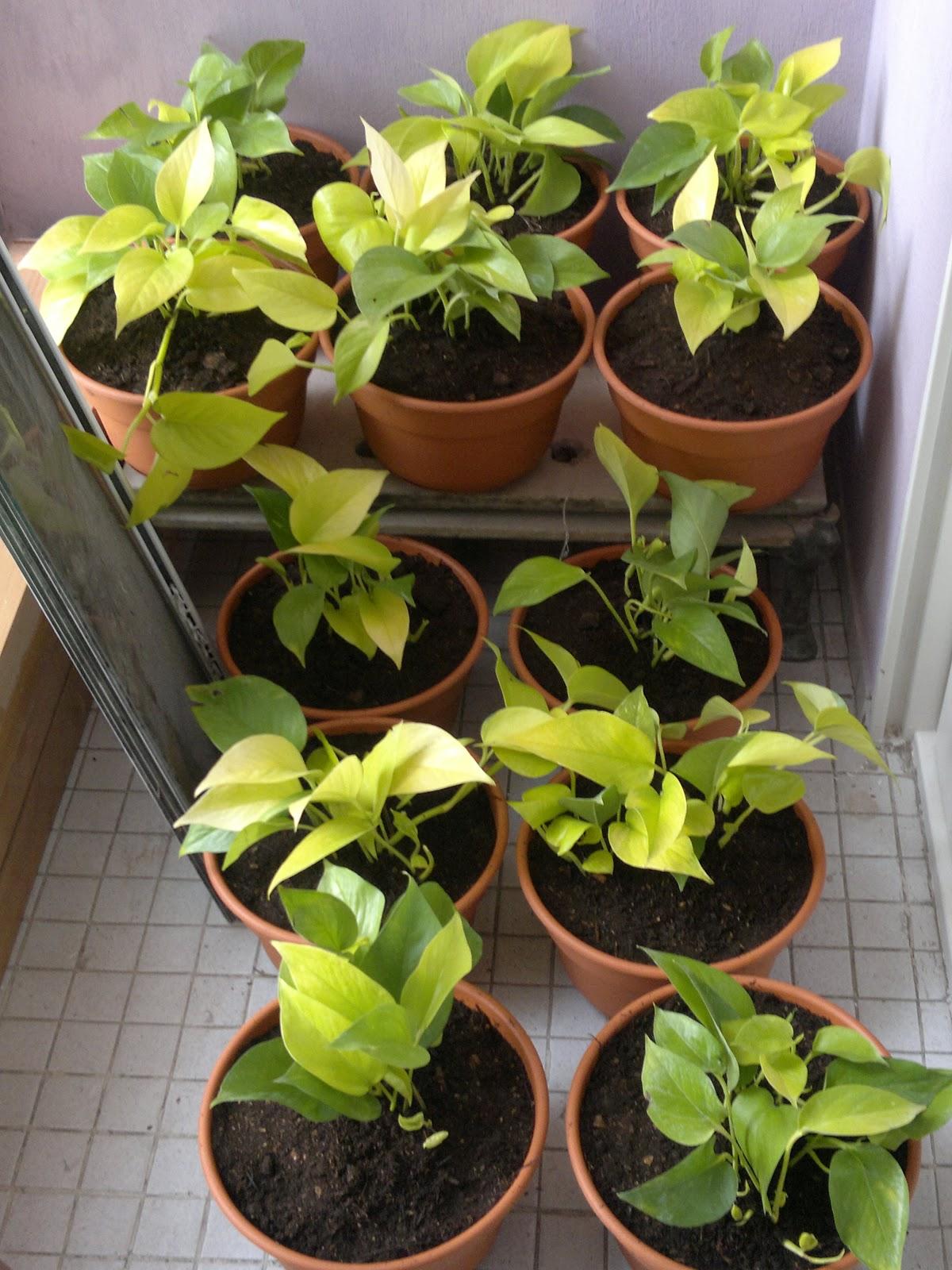 T cnico en jardiner a dise o en balc n interior - Enredaderas de interior ...