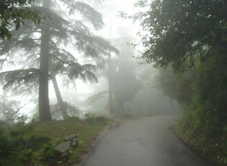 Cloud forests Fog Forest