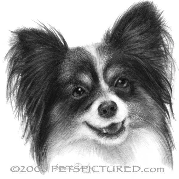 Dog Breeds Wiki Intelligence