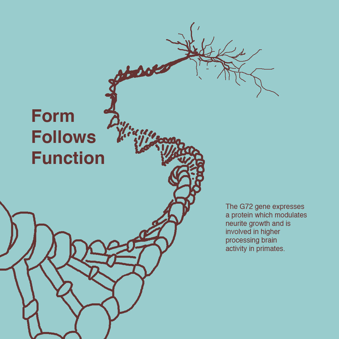 form follows function The form follows function axiom is simply too broad and high minded to apply in any meaningful way to the relationship between a website's design and its content - that is to say content as distinct from functionality.