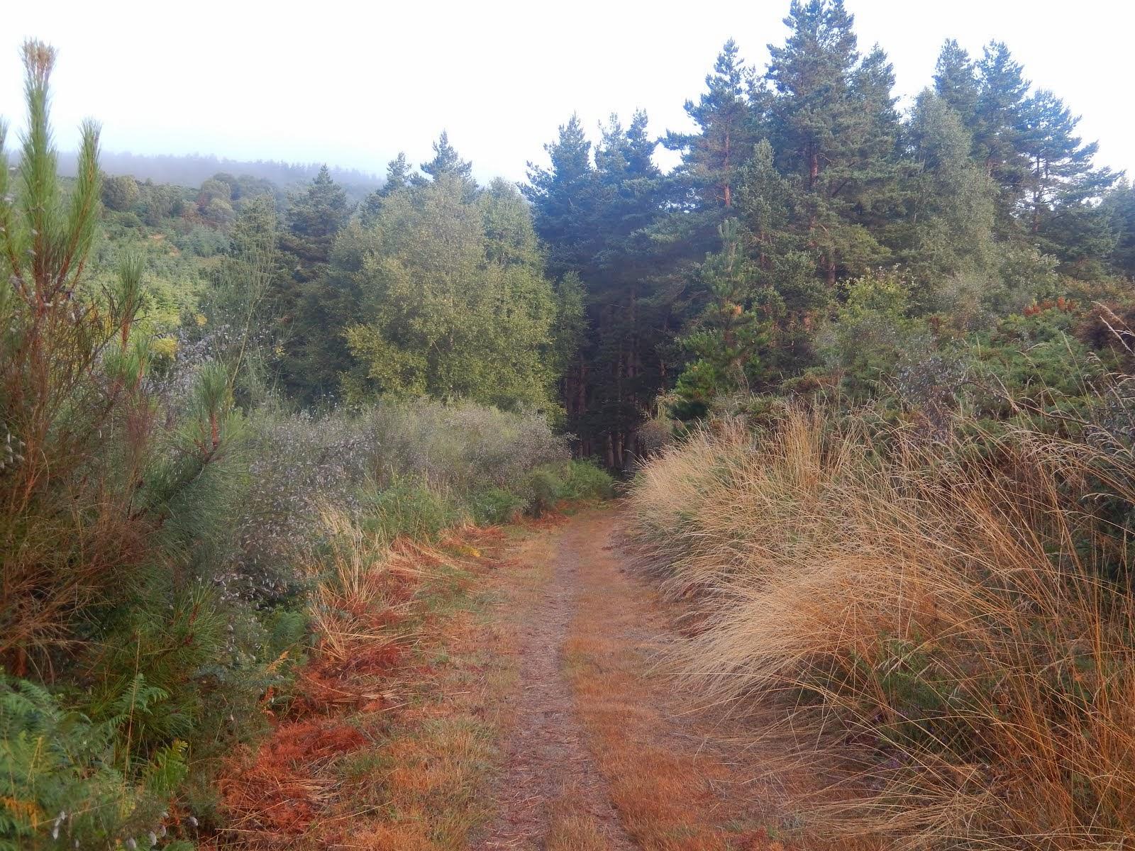 Le chemin vers O Cadavo.