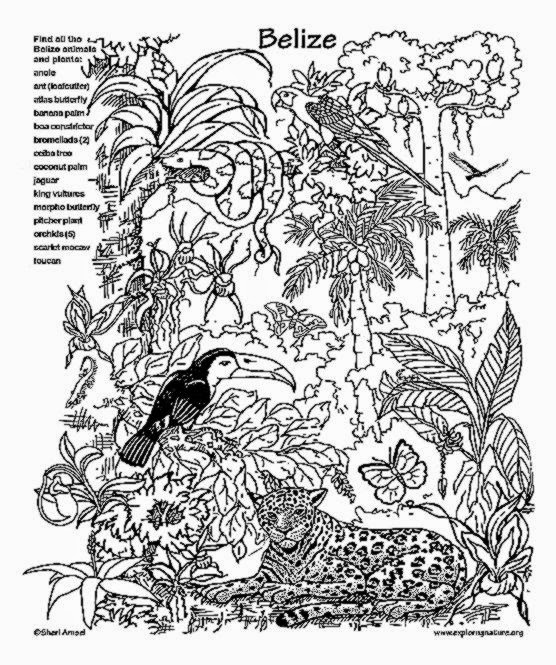 Free Printable Coloring Pages Rainforest Animals  RedCabWorcester