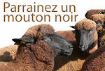 Parrainez un mouton noir