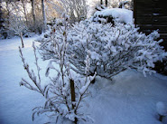 *Schnee 1*