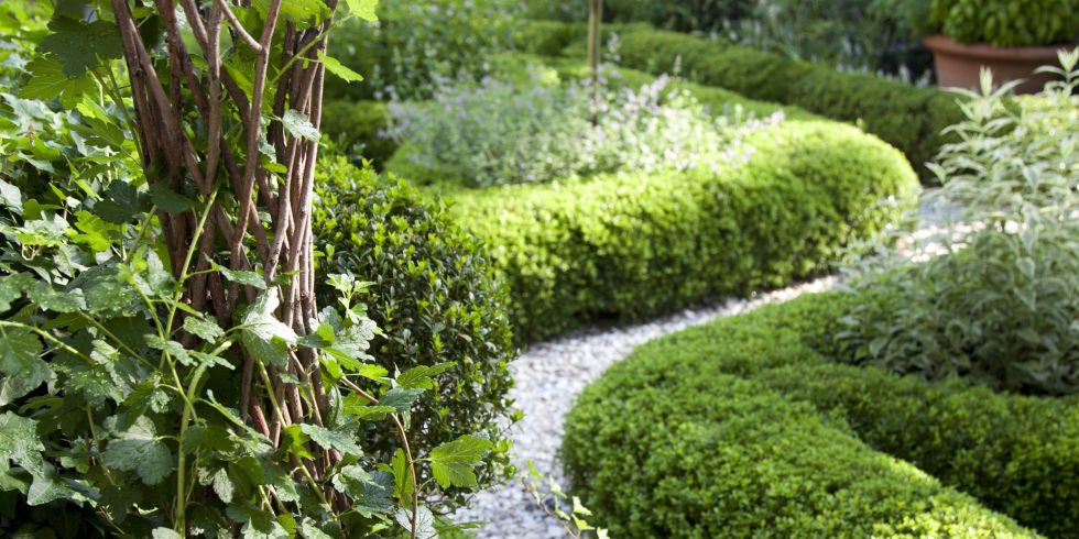 For the Love of Gardening: July 2015