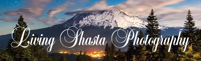 Living Shasta Photography on the go!