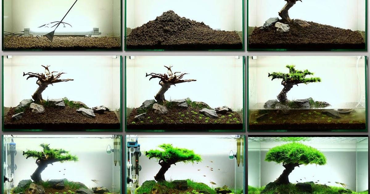 cara membuat aquascape yang minimalis: Rincian dan cara ...