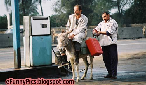 Donkey Corolla