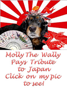 Molly The Wally Visits Japan!