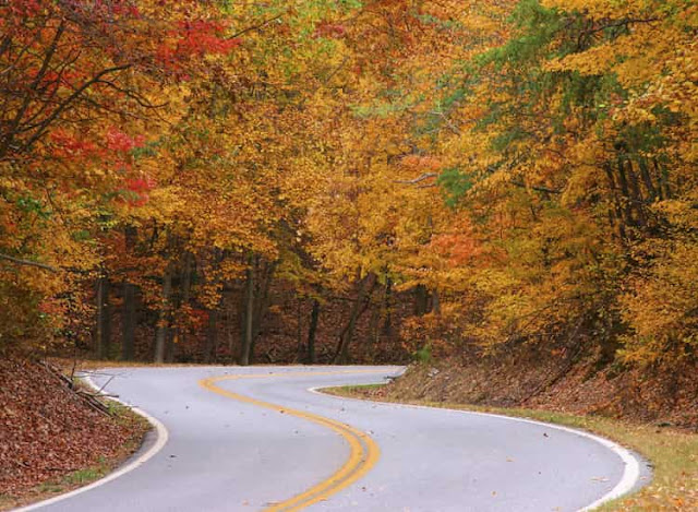 Autumn Road, North Georgia, USA