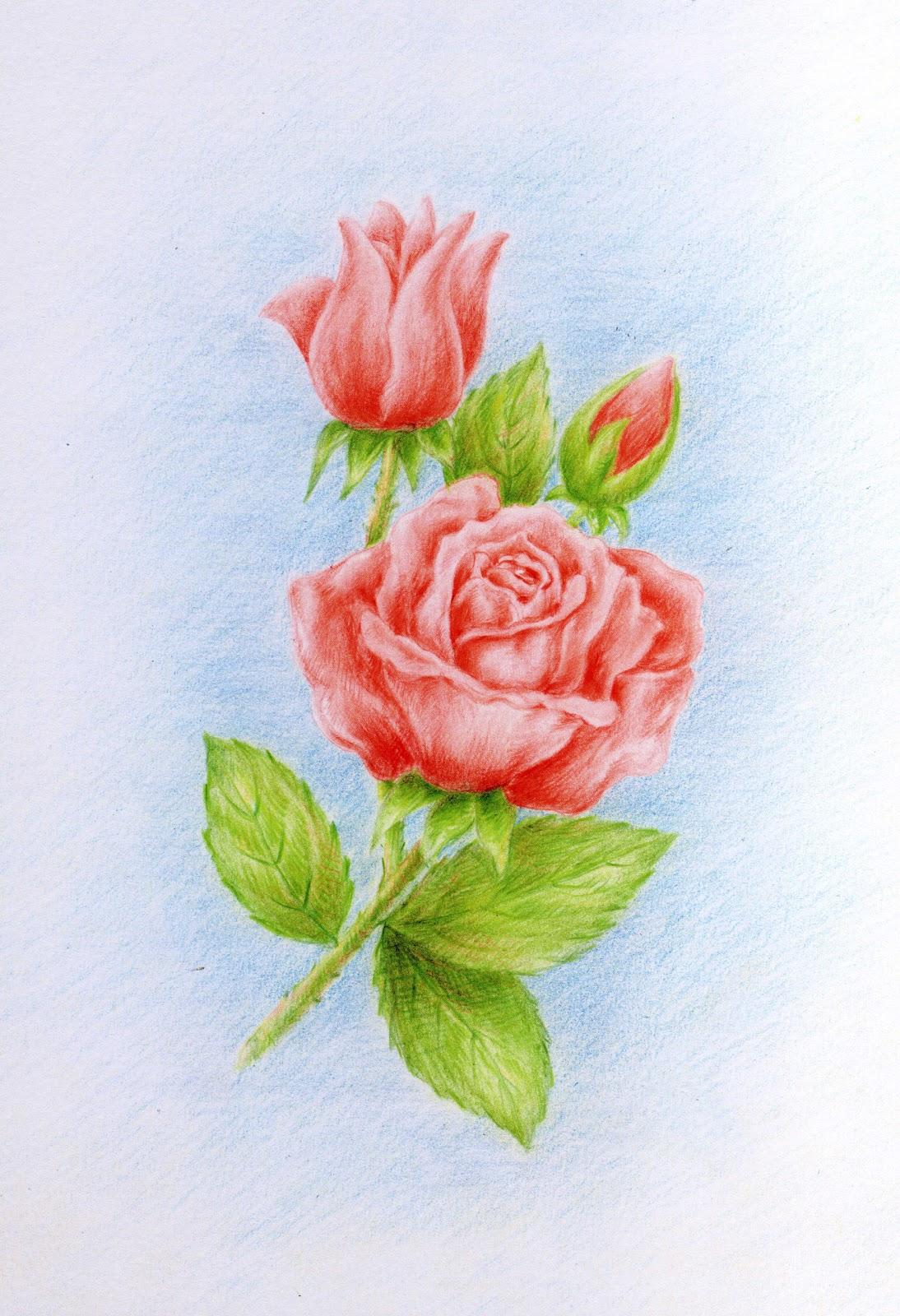 Prof carmelo cozzo disegni a matita for Disegni di fiori a matita