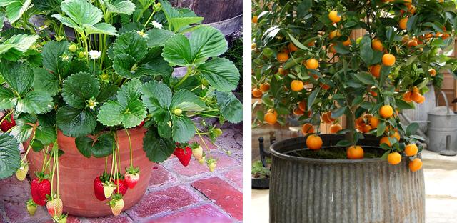imagens de jardim horta e pomar : imagens de jardim horta e pomar: à Natureza: PLANTAS E JARDINS >> HORTA & POMAR >> PREPARO DA HORTA