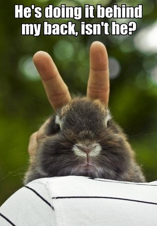 A Bunny Knows!