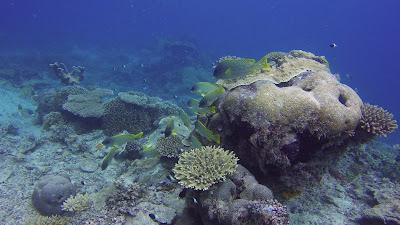 coral reef Mafia island Tanzania