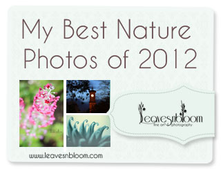 my best Perthshire nature photos of 2012